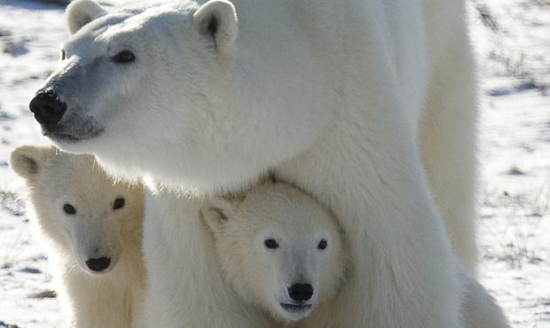 cropped-polar-mom.jpg